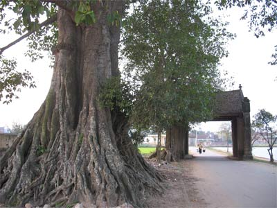 Duong Lam village,